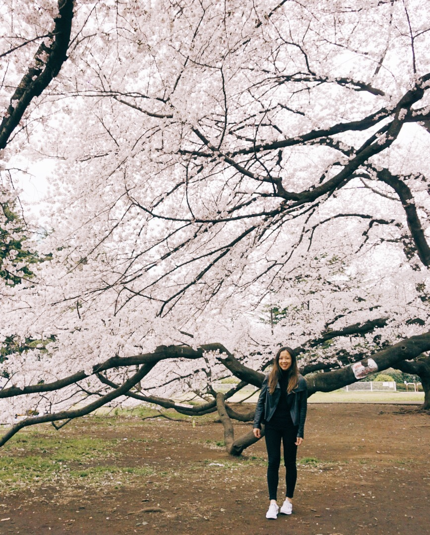 hanami-cherry-blossoms-kinuta-blogger