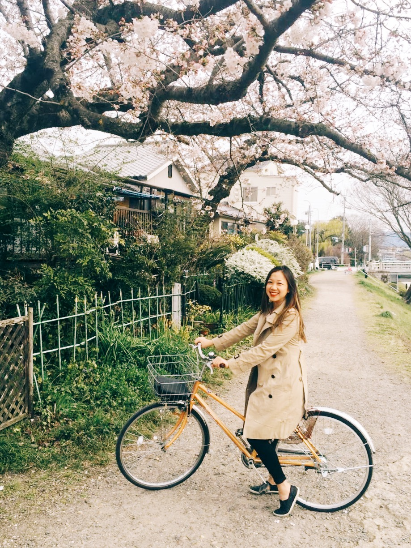 kyoto-blogger-cherry-blossoms