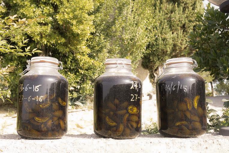 Jars of homemade nocino, or walnut liqueur, in progress.