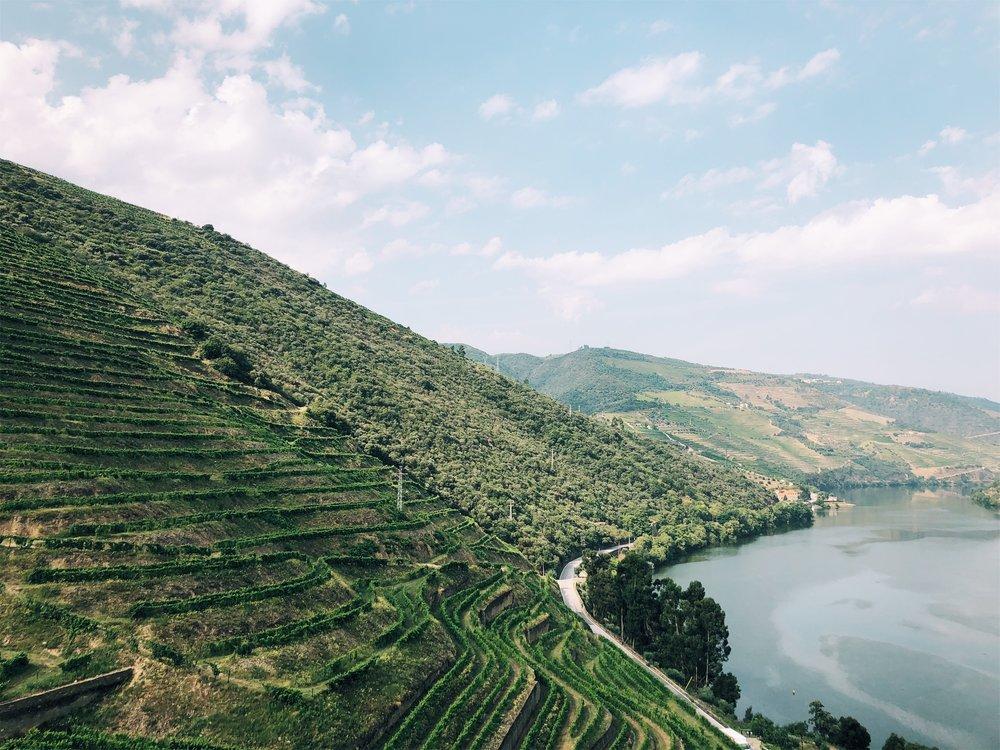Douro River vineyard views