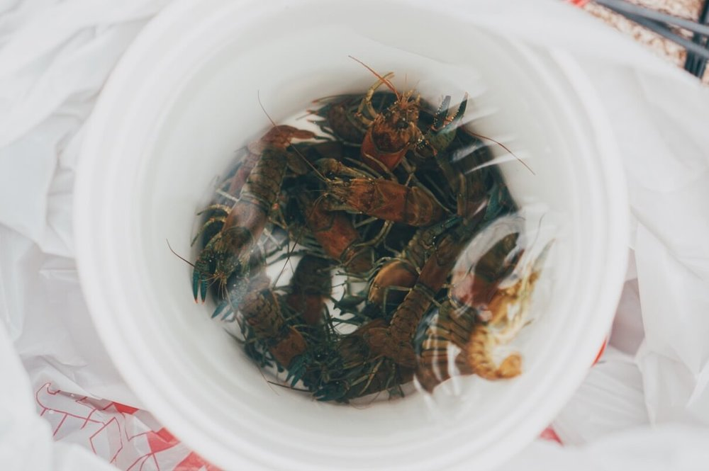 crawfish for small mouth bass fishing