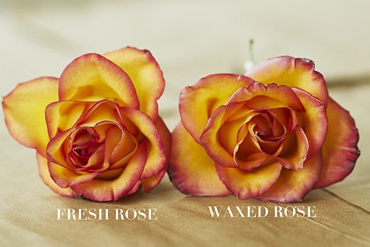 Note how real the wax rose looks on the right compared to the real flower on the left.