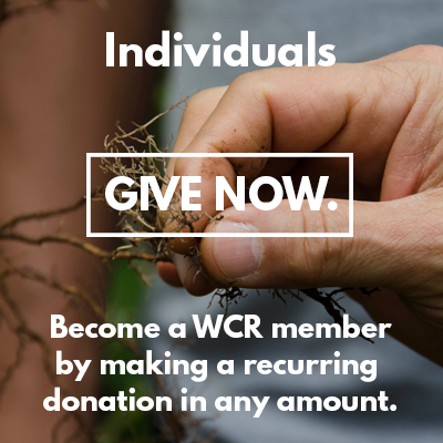 Individuals_GIVE-NOW.png