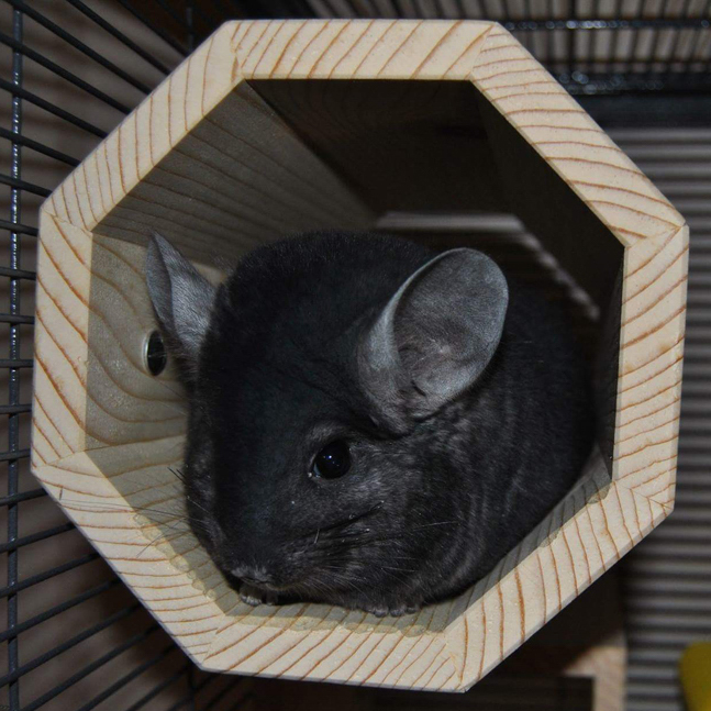 Bullet sitting in his Hanging Octagonal Tunnel.