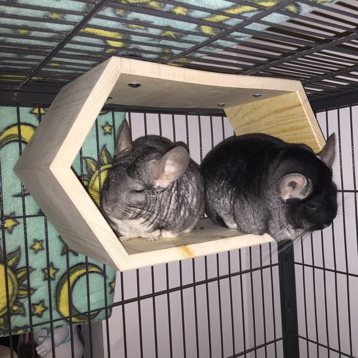 Joanie and Chachi sleeping in their Hanging Hexagonal Tunnel.