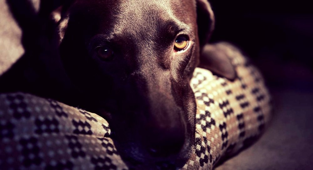 Never be alone... walking your dog at night   Constant companion: Instant freedom    Sign Up Now!