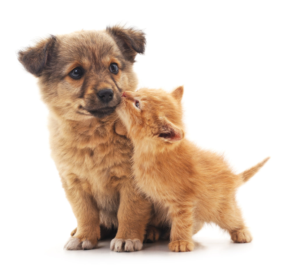 iStock-Purchased Puppy Kitty 820733230.jpg