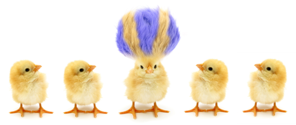 Group of chicks.png