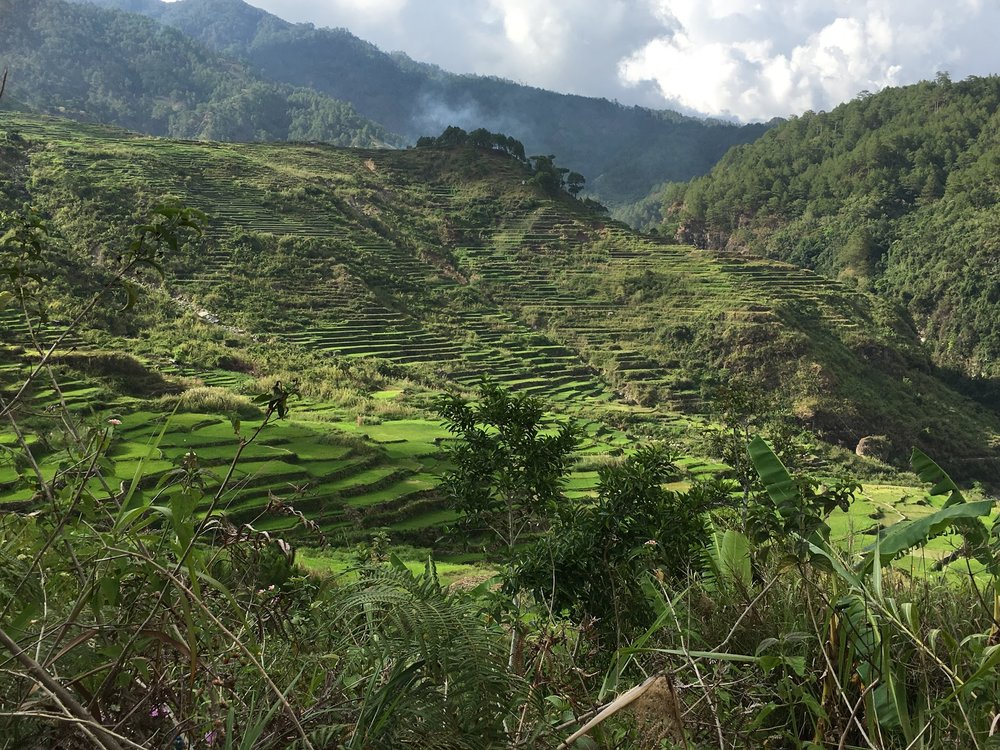 Rice terraces on the hike going to Bomod-Ok Falls