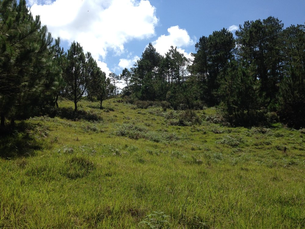 Hiking towards Mount Ampacao
