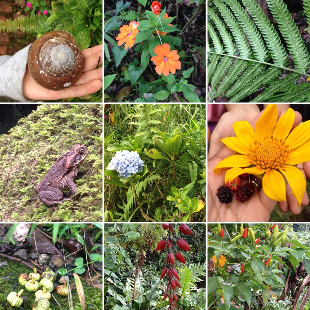 The flora and fauna of BK valley