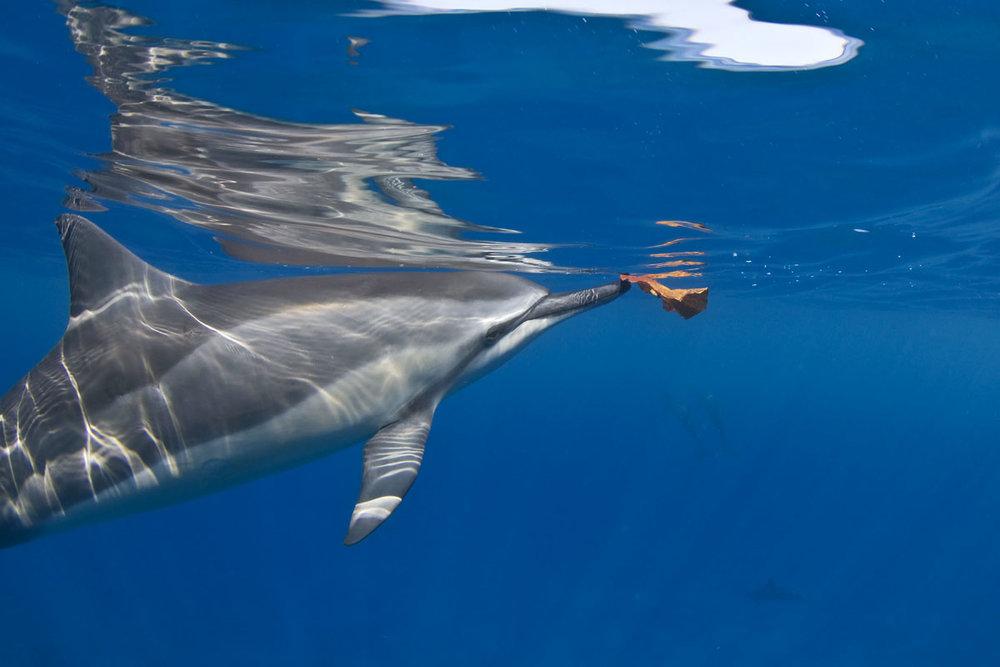 dolphin 01.jpg