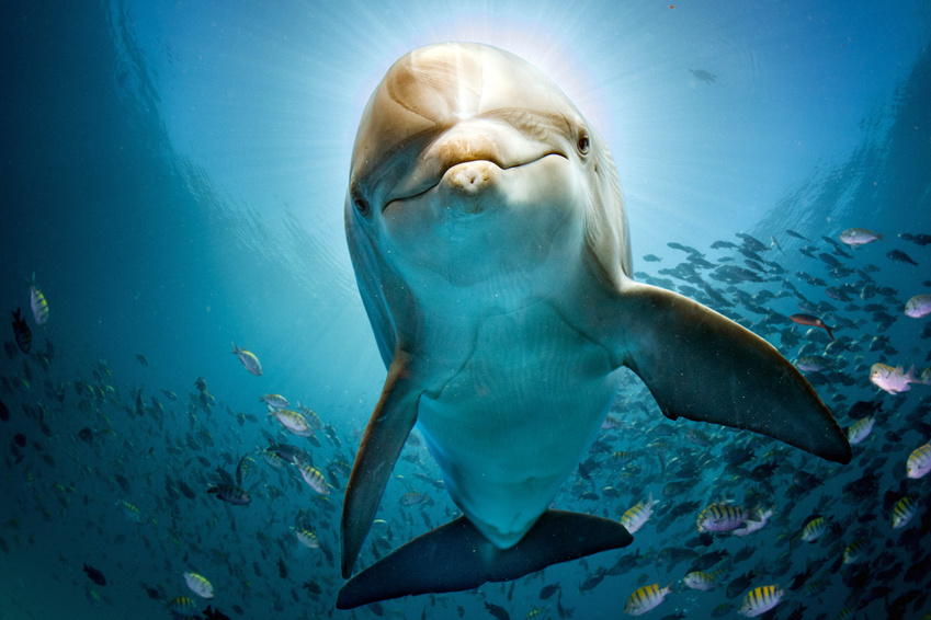 dolphin tours.jpg