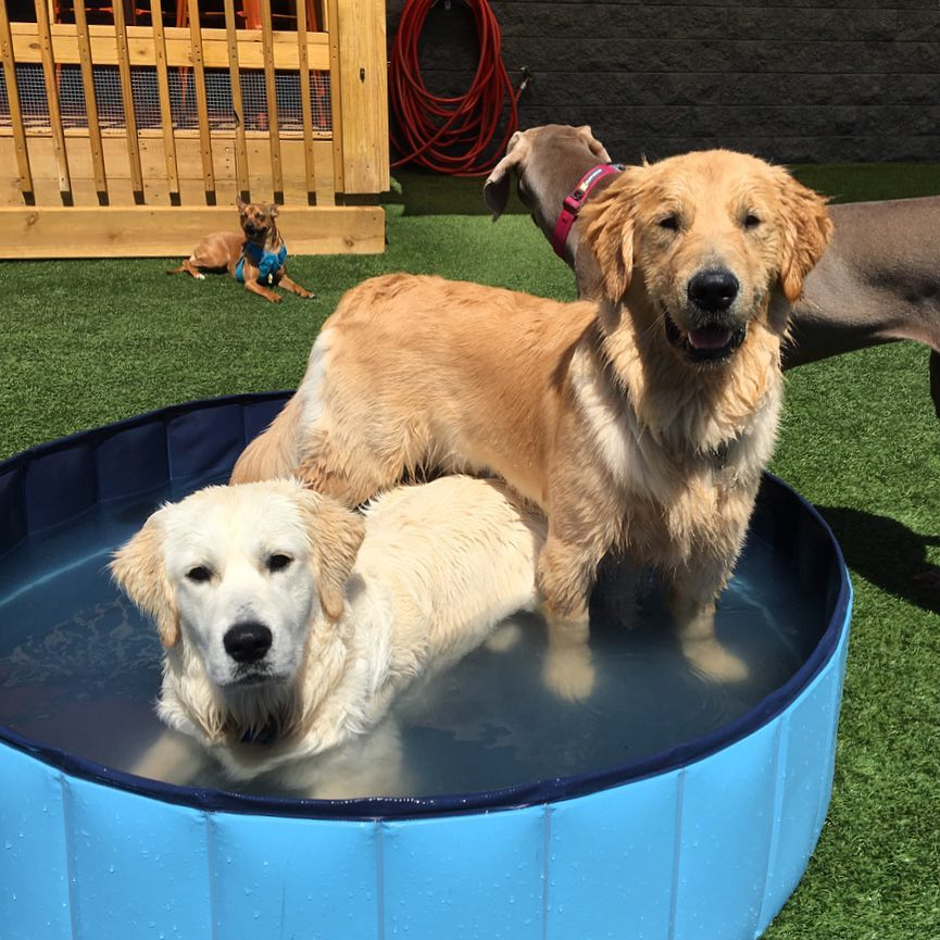 pups-in-pool.jpg