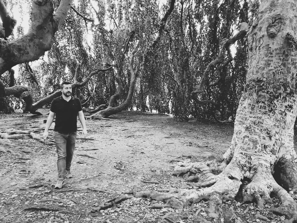 Martin wandering under a magical tree located on the grounds of a potential wedding venue