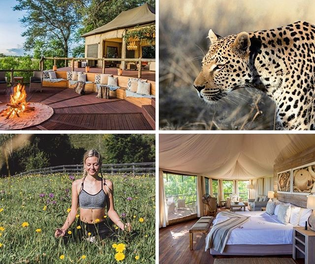 🐘🦓 Yoga Safari Retreat 🐅🐆 Picture this... You wake-up in a glamorous tree-top room after the most 𝘥𝘳𝘦𝘢𝘮𝘺 night's sleep.  Take a few steps onto your private viewing balcony to see herds of wild elephants and buffalo play in the floodplains below.  Move and meditate in morning 𝘧𝘭𝘰𝘸 classes, and unwind in my super-chill yin sunset sessions.  Feast on nourishing plant-based food, fuel-up on superstar superfoods from @hybridherbs 🌱  Spot hippos and big cats in safari drives, cruise the backwaters on a traditional boat, explore the local flora and fauna on guided walks, and make life-long friends around a fire pit under the 𝘴𝘵𝘢𝘳𝘭𝘪𝘵 skies.  This is going to be ✨𝕄𝕒𝕘𝕚𝕔𝕒𝕝✨  I'm hosting the Yoga Safari between 25 Nov - 1 Dec in one of Namibia's most beautiful national parks. Spaces are limited, you can secure your spot with a deposit. Click the link in my bio for more details, or book direct through @namaste_yoga_safari 💚