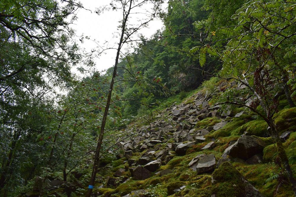 Söderåsen National Park