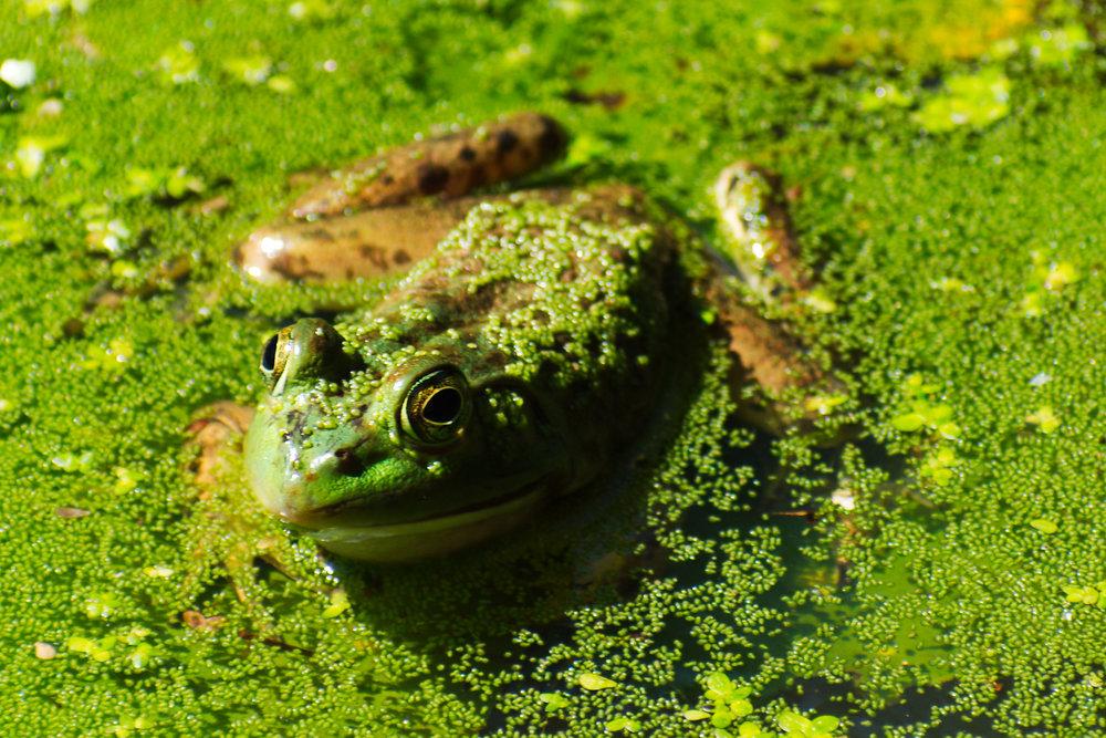 Frog-Kate.jpg