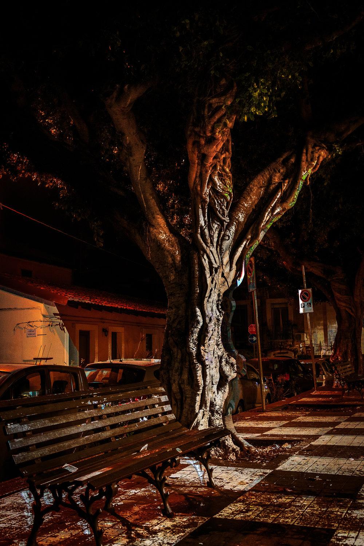 Catania 3Feb2018-51-Tree.jpg