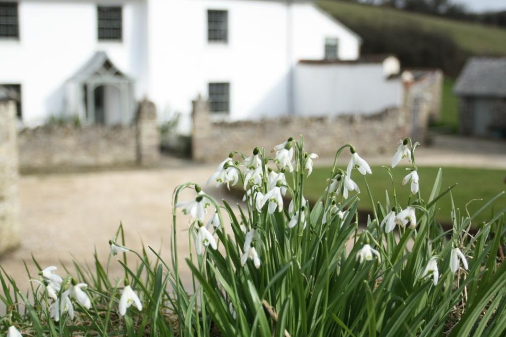 upcott farm snowdrops