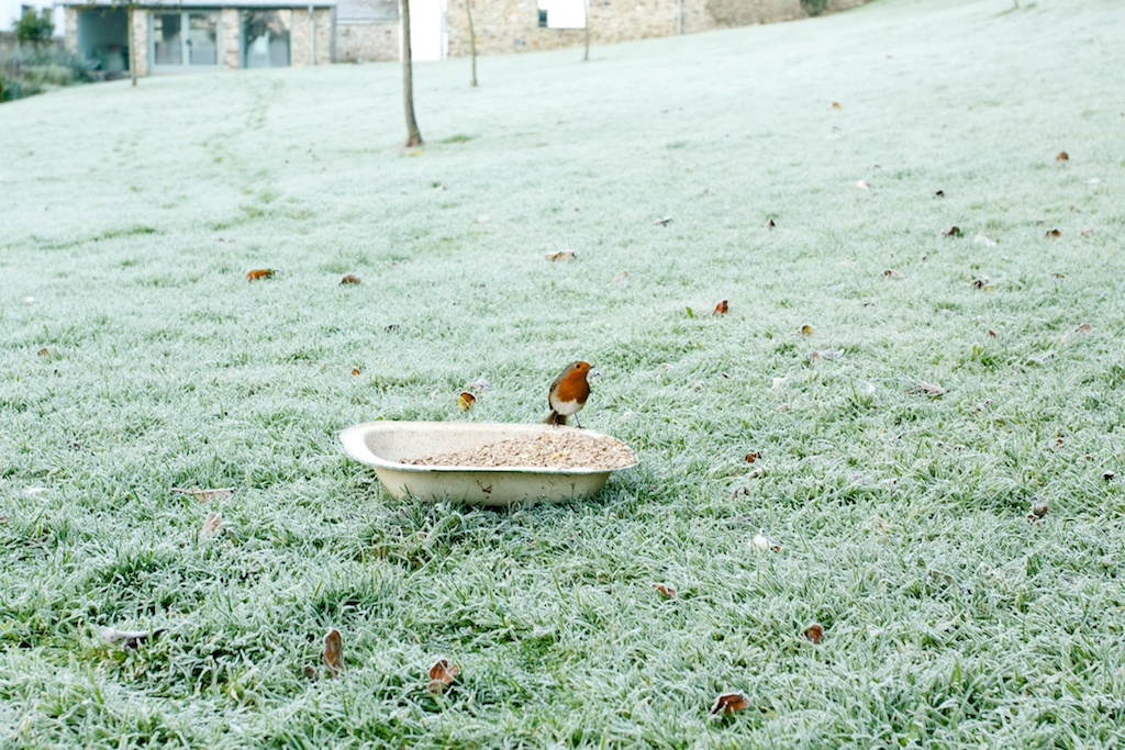 upcott farm robin