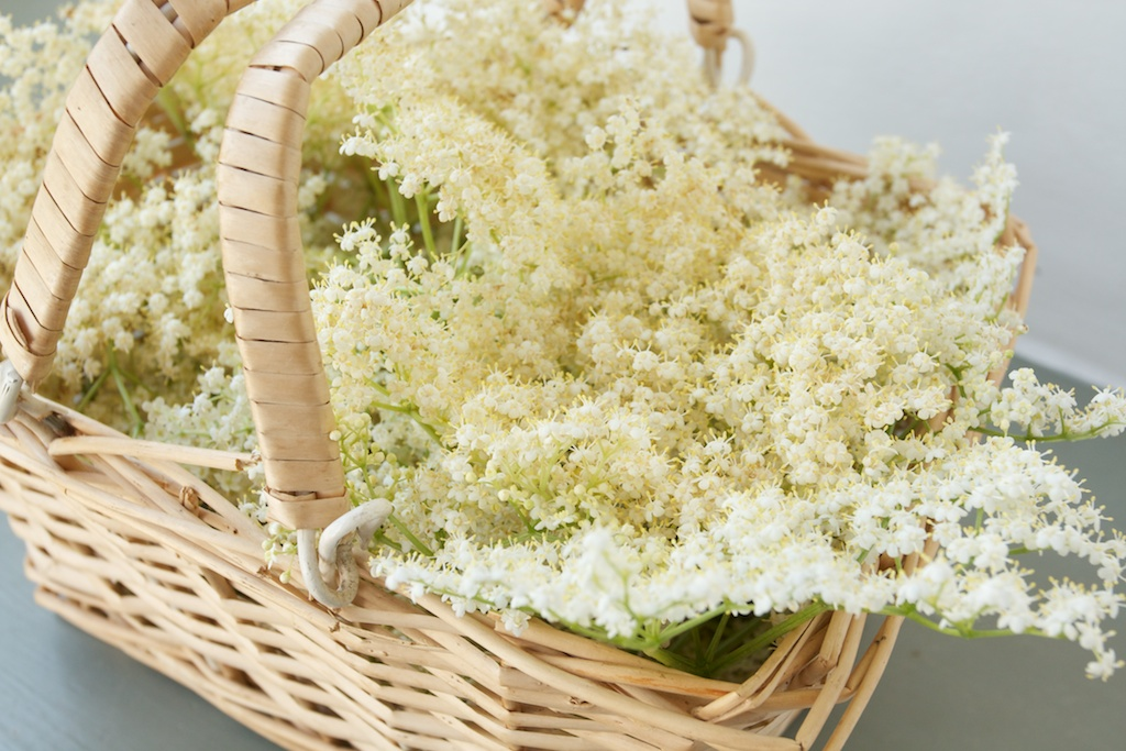 upcott farm elderflower