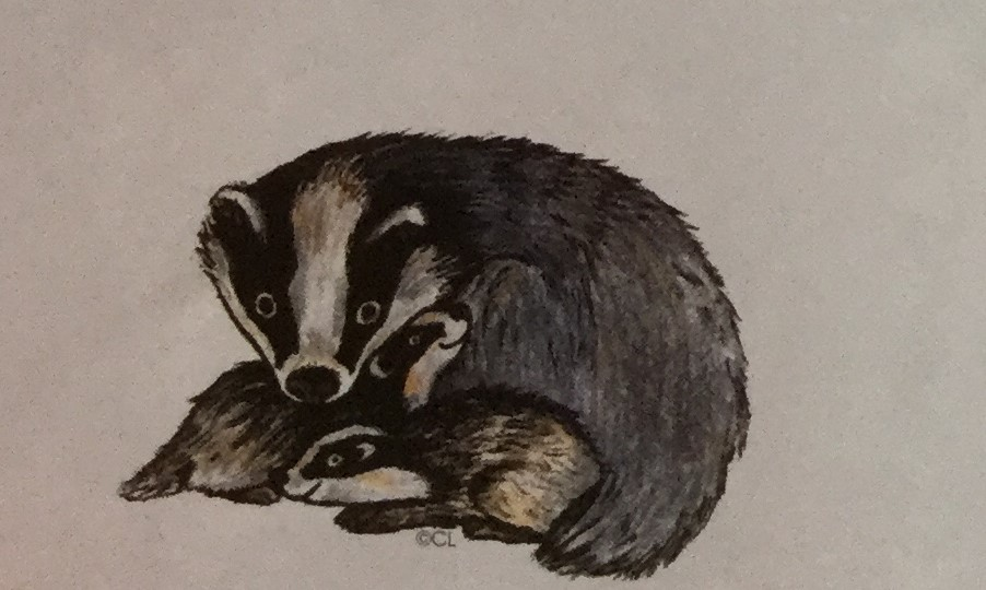 Badger & Cubs
