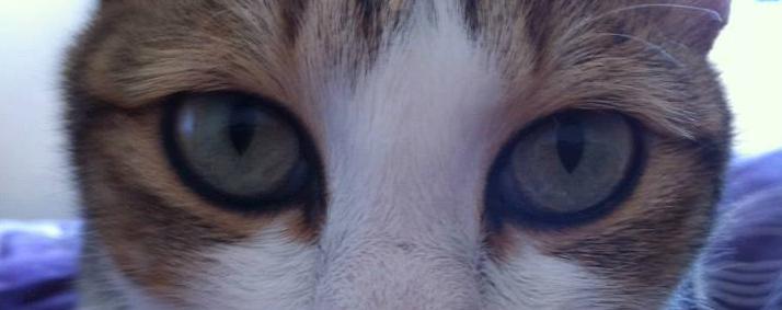 Larm eye.jpg