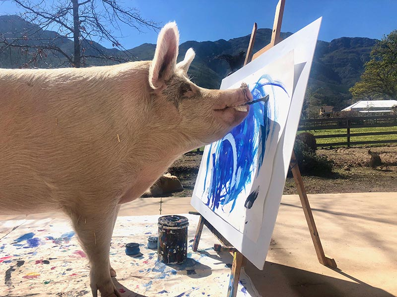 Some of Pigcasso's paintings have sold for more than $2,000. (Photo:  Pigcasso )