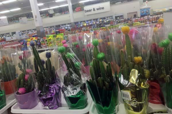 Even CVS Pharmacy peddles the visually-enhanced plants. (Photo:  Jessie Schiewe )