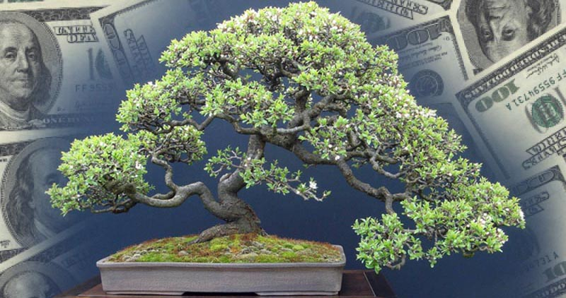 rare-bonsai-tree