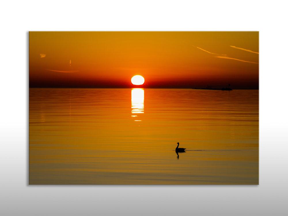 Sunrise Goose.jpg