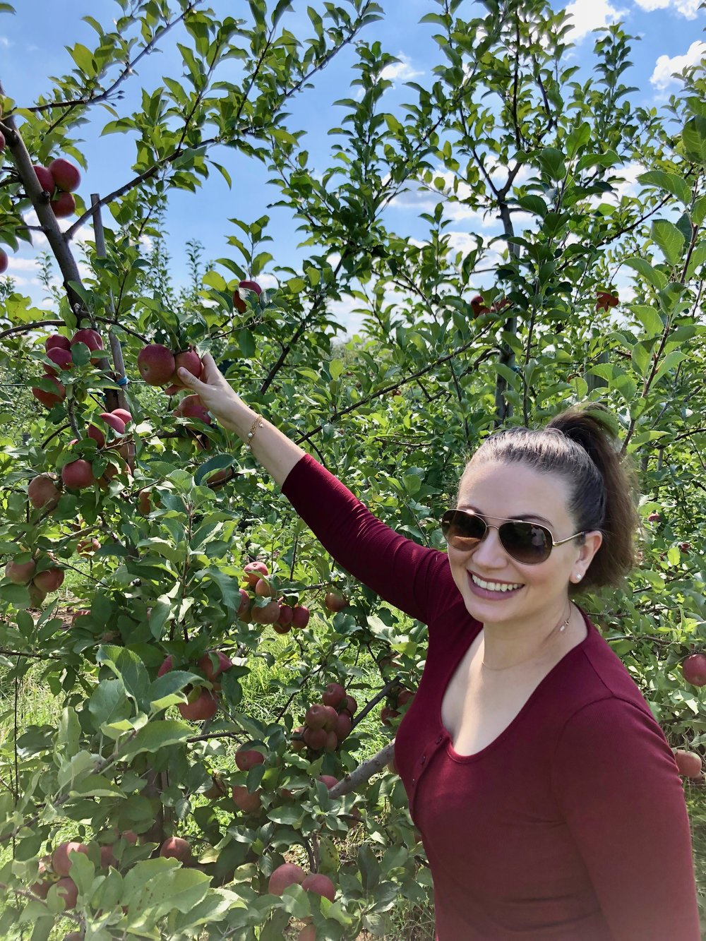 Apple picking at McIntosh Fruit Farm
