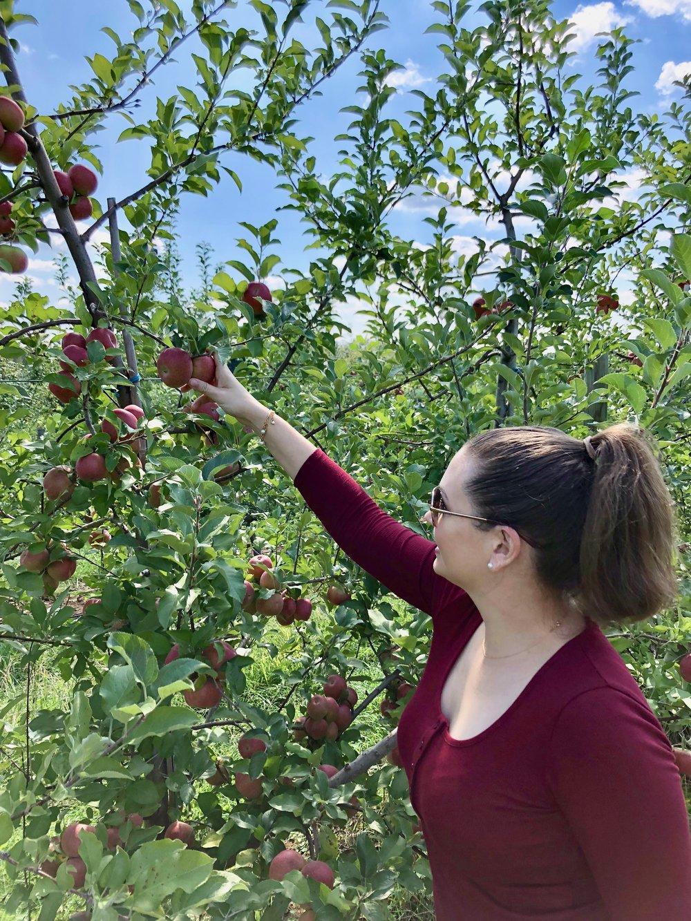 Apple Picking at Macintosh Fruit Farm
