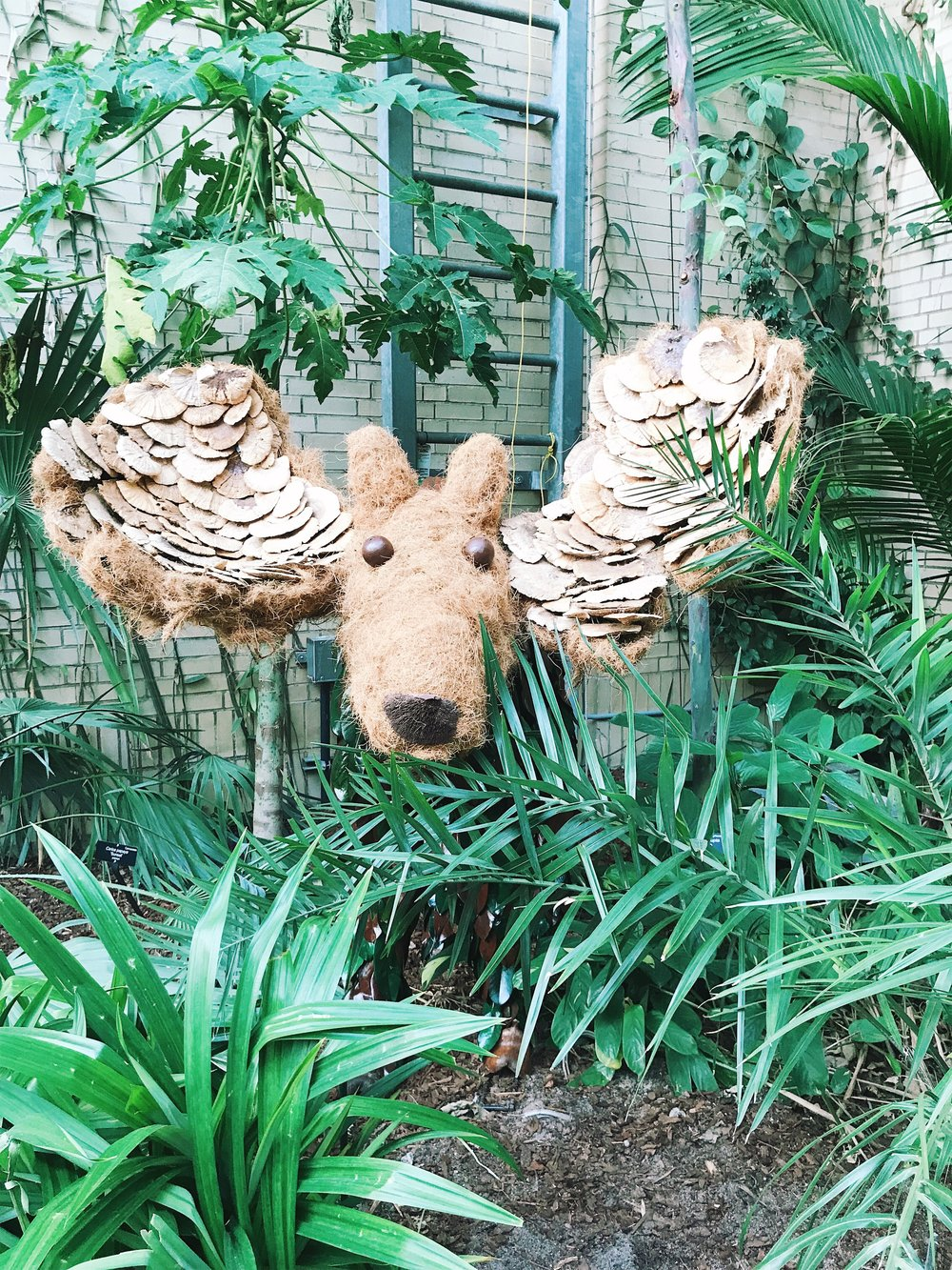 A moose on the loose at the National Conservatory