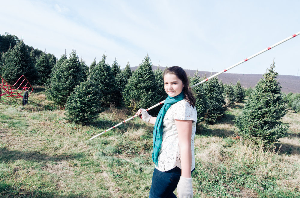 The Christmas Tree Harvest: A Perfect Opportunity for a Holiday Card ...