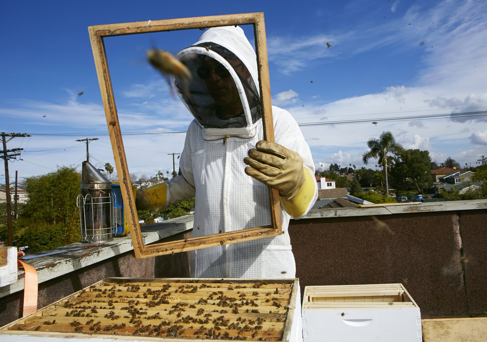 Urban_Beekeeping_ONe_1.jpg
