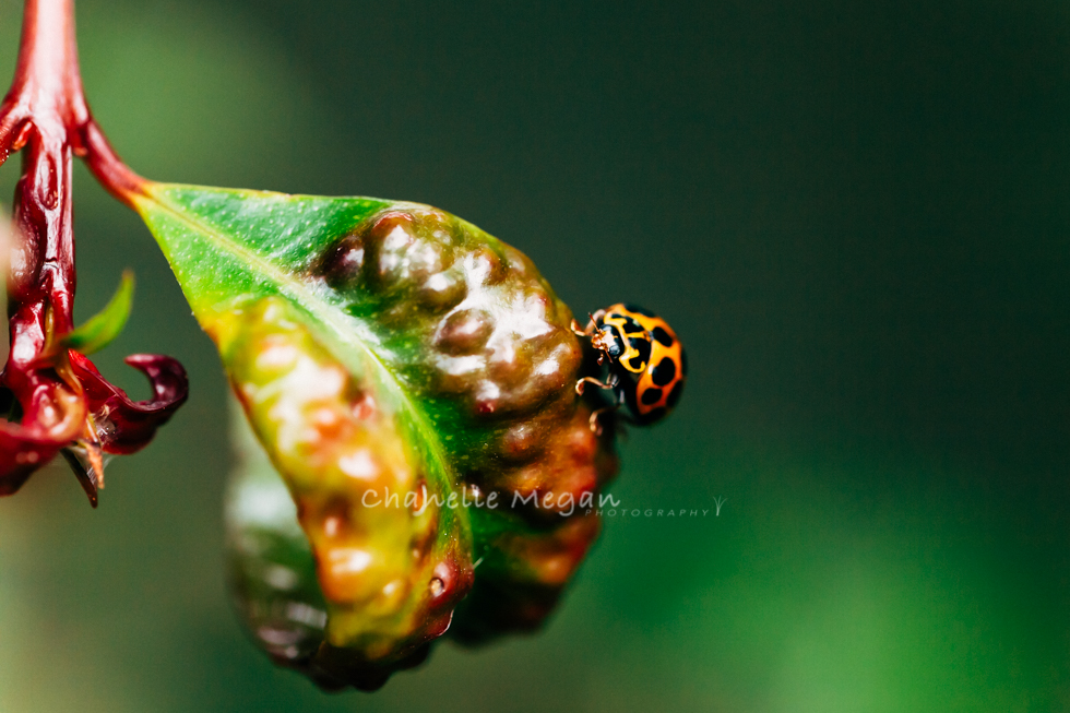 Natures Colours, Ladybird.