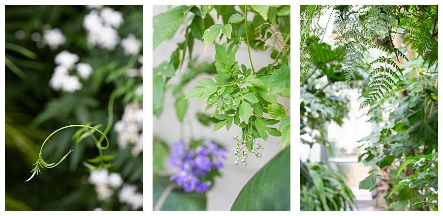 Instameet Oxford Botanical Garden-9375-2.jpg
