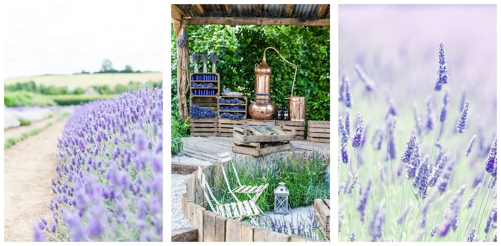 Katie Spicer Photography - Cotswold Lavender-0793.jpg