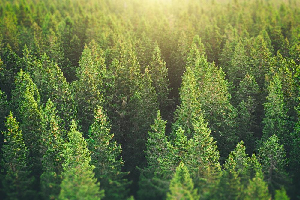 environment -
