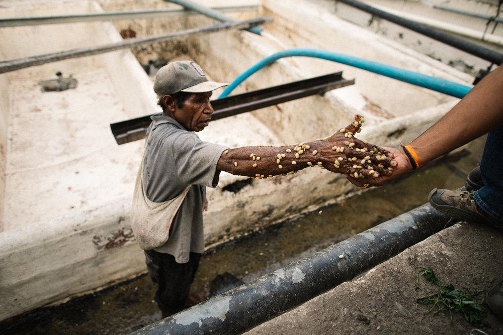 Papua New Guinea // Zest Coffee