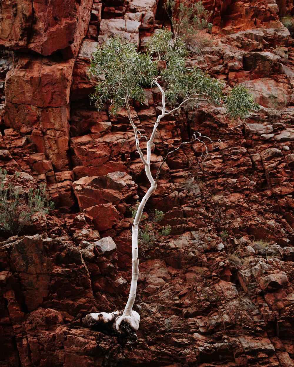 Alice Springs (25 of 71).jpg