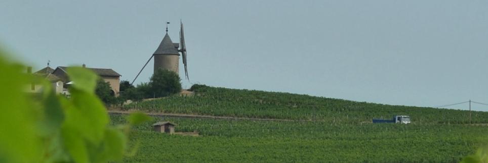 Arendal Vintners presenterer en strukturert, mørk og mineralsk Moulin-á-Vent
