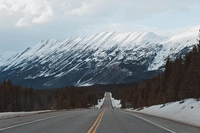 This steep chain of mountains always appeal to me when I drive up to Jasper. Makes me want to climb it and walk along the ridge and just peer around the surrounding views.  #jaspernationalpark #jasper #endlesschain #highway93 #canada #vsco #vscocam #instatravel #alberta #tourismalberta #explore #explorecreate #winter #createandcapture #adventuretime #travelalberta #explorecanada #abparks