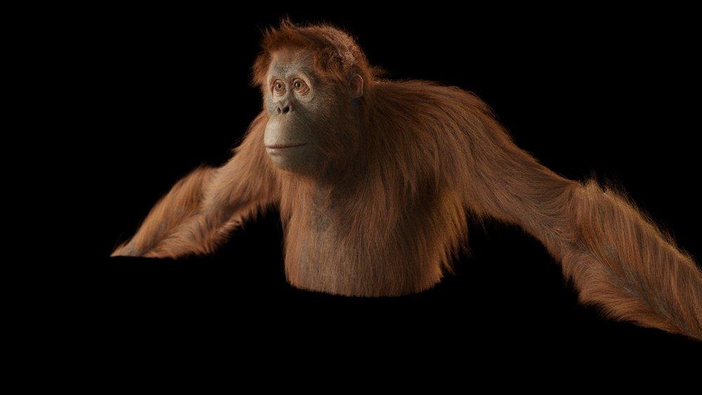 20170512_orangutan_lookdev_lighttest.jpg