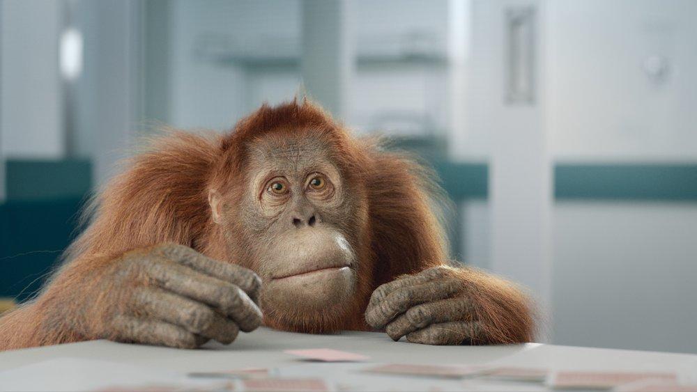 20170515_orangutan_sh050_slapcomp_v012.jpg