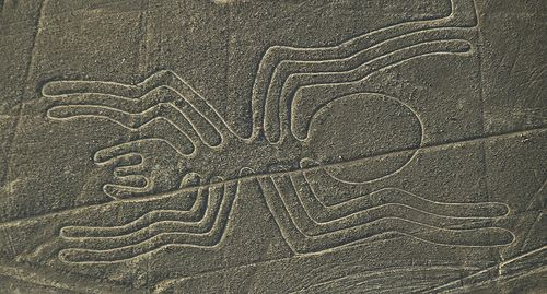 The Nazca Spider