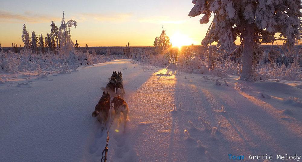 dog-sled-tour-2.jpg