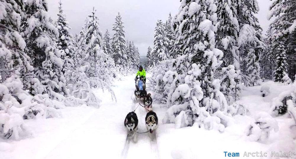 dog-sled-tour-3.jpg